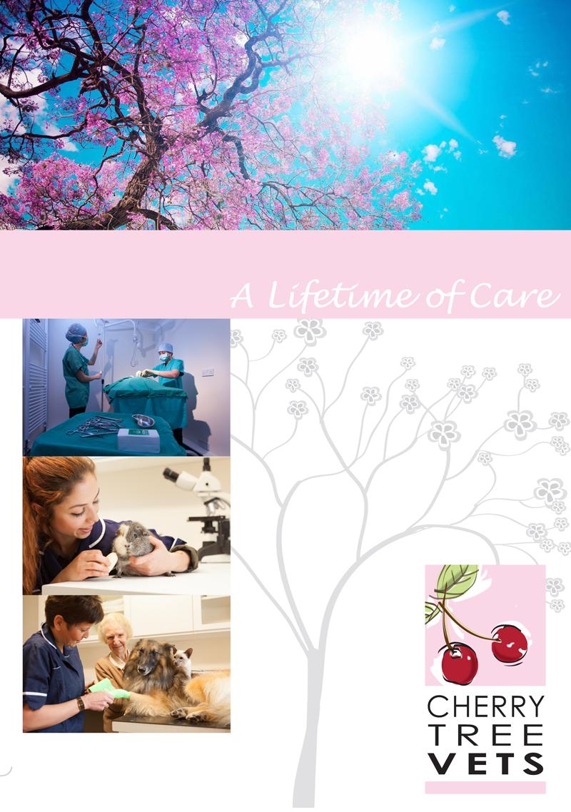 Brochure and website design